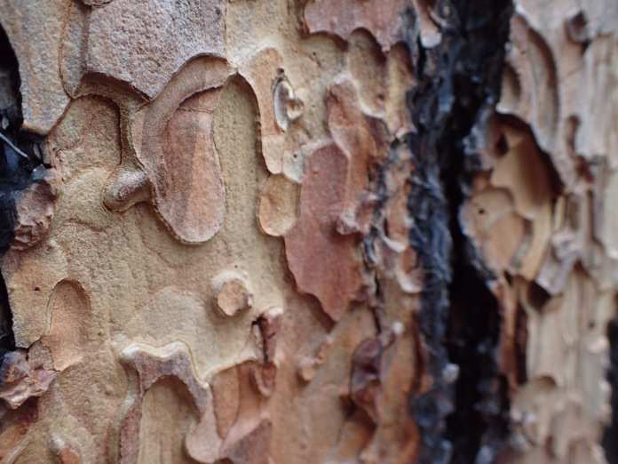 Tree bark Stace.jpg